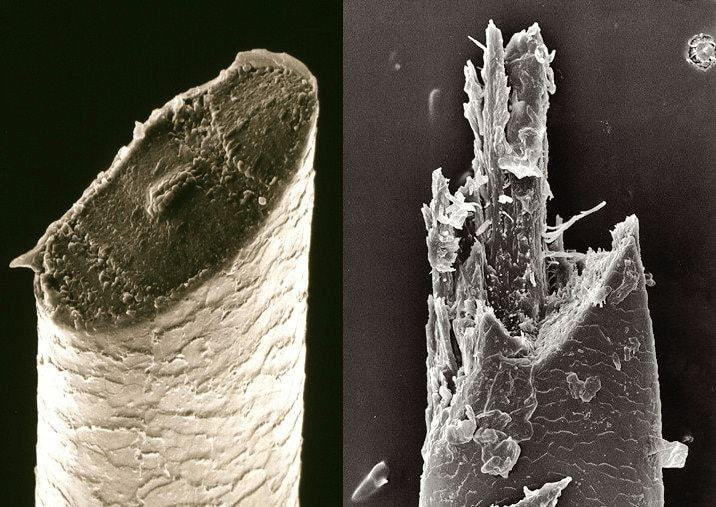 Beard Hair under Electron Microscope: Blade vs electric shaver
