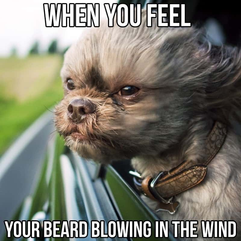 beard-meme-14 50 Funny Beard Memes That'll Definitely Make You Laugh