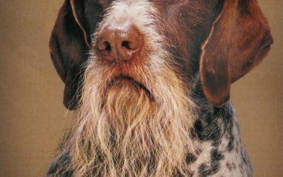 animals with beards