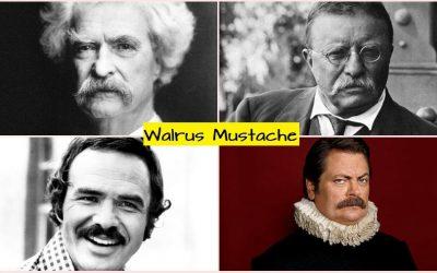 walrus mustache style