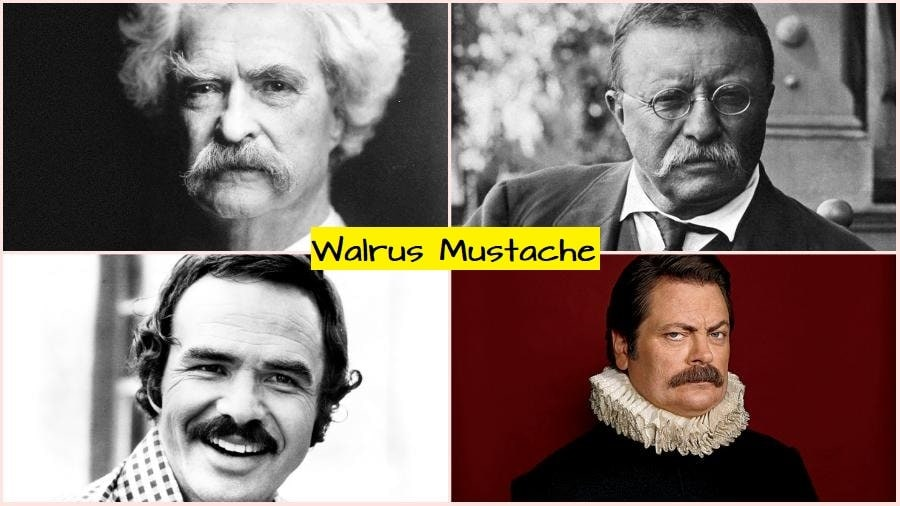 walrus-mustache-style How to Grow & Style A Walrus Mustache: The Ultimate Guide
